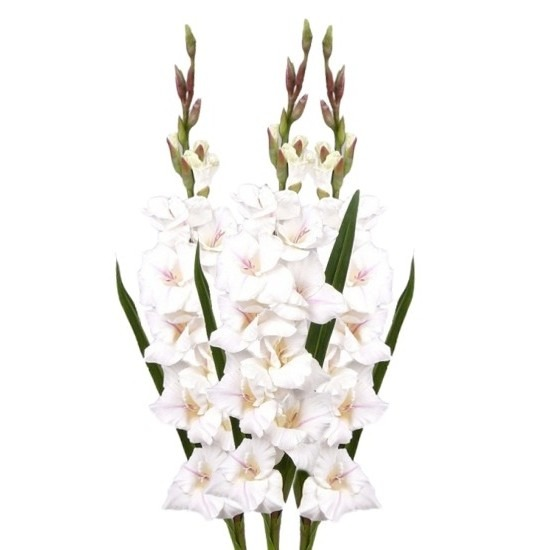 3x Witte gladiolen kunstbloemen takken 102 cm