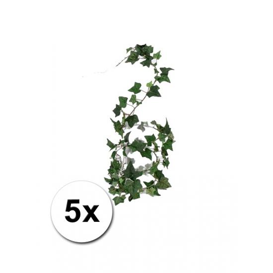 5 bosjes klimop slinger Hedera Helix 180 cm