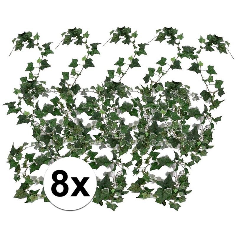 8x Klimop slinger Hedera Helix 180 cm